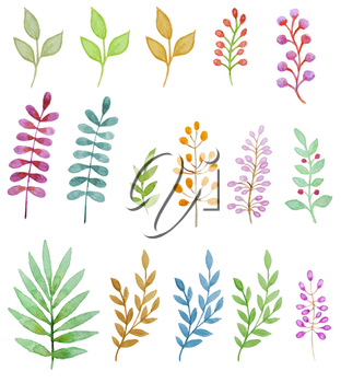 Watercolor floral design elements, flowers and leaves