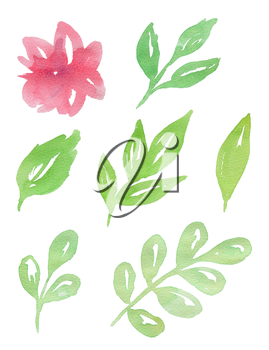 Set of hand drawn pink watercolor flowers and green leaves