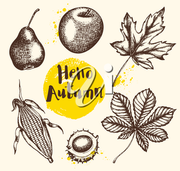 Set of vector vintage autumn plants and fruits. Hand drawn illustration.