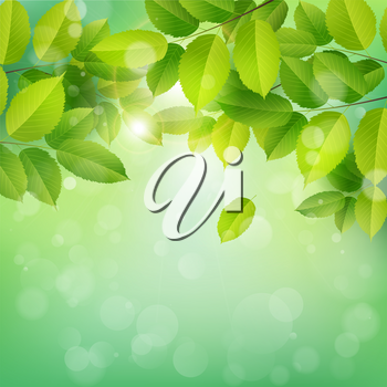Spring nature banner with green leaves. Elm branch on a green background. Vector illustration.