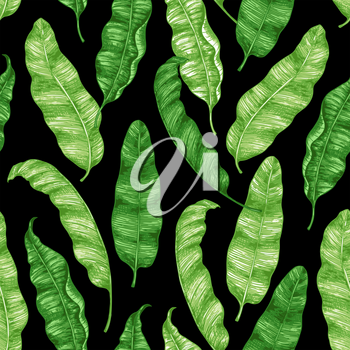 Tropical seamless pattern with green banana leaves on a black background. Hand drawn vintage vector illustration.