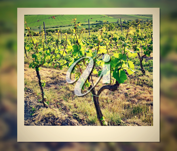 Instant photo frame with vineyard.