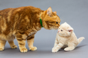 Adult cat and a small kitten on a grey background