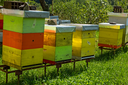 Wooden beehives in the forests of Montenegro