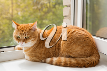 Red cat sitting on the windowsill in the summer