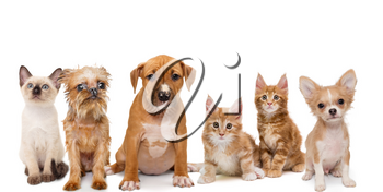 Portrait of small kittens and puppies on a white background