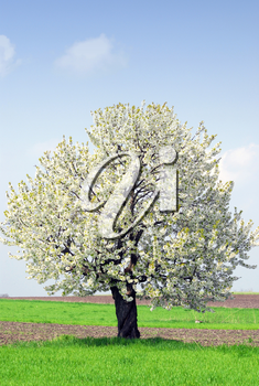 Outdoor nature scene with spring tree