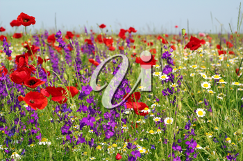 meadow with wild flowers spring scene