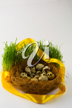 Wild bird eggs in a nest in fresh green grass with a yellow satin ribbon on white background. Easter background. Easter symbol. Top view with copy space. Vertical