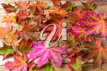 Colorful fall maple leaves background.  Autumn leaves on wooden background