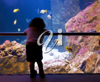 Little girl watching fishes in a large aquarium in Livorno, Italy.